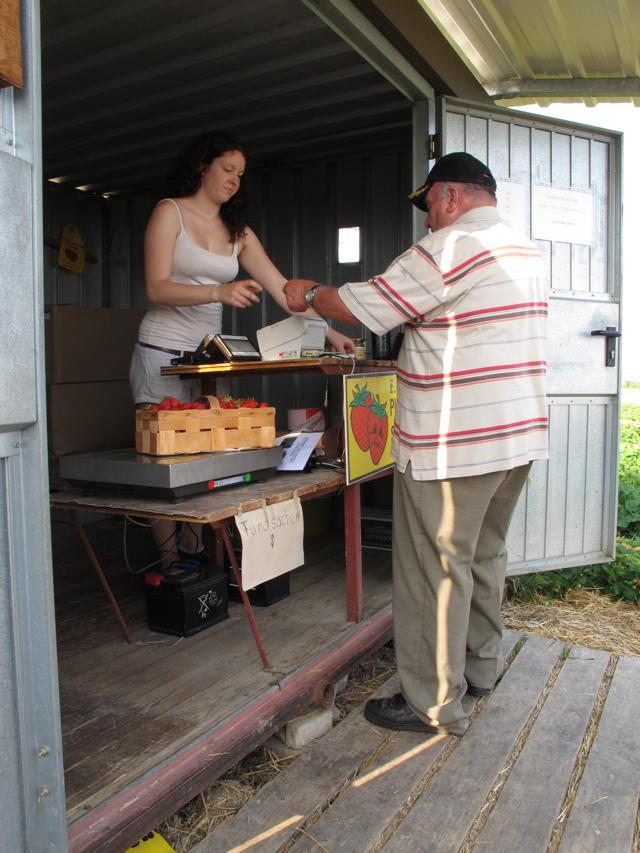Julia Baumgärtner jobbt in den Semesterferien auf dem Erdbeerfeld. Bei bezahlen die Selbstpflücker ihre süßen Früchte. Foto: Zenke