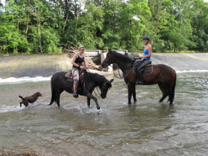 Der Araber Flinn (links) und die Holländerin Cassilia kühlen sich sichtlich begeistert die Hufe im Neckar bei Mittelstadt. Daneben planscht Hund Cuba. Foto: Zenke