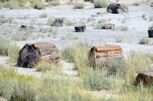 Versteinerte Baumstämme im Petrified Forest. Foto: co