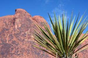 Atemberaubende Farben und Formen im ältesten State Park von Nevada. Foto: co